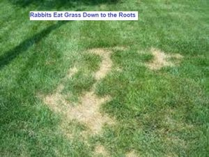 rabbits eat roots