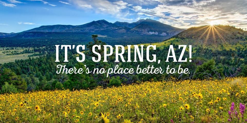 spring-time-sprinkler repair